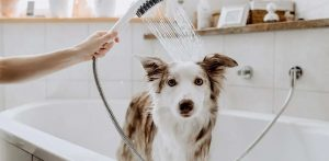 Hansgrohe, Lixil Have Entered The Pet Bathroom Market